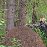 SAGITTA ORSO ATV 200 - Фото. (20)